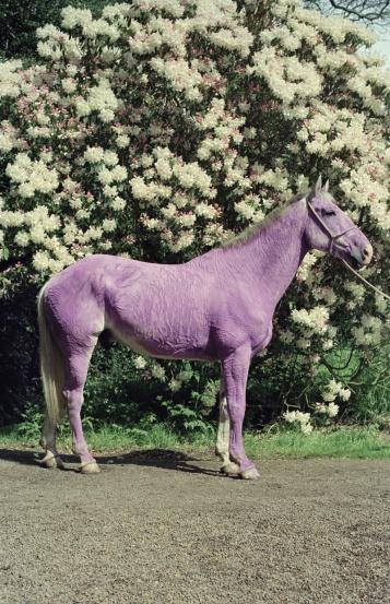 1999-tim-walker-lilac-horse