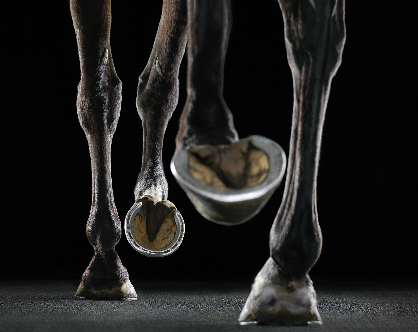 www.lacavalieremasquee.com | Equus by Tim Flach