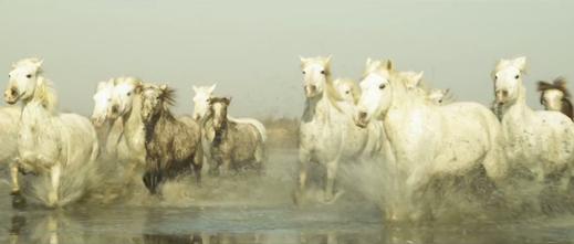2012-ba-gazelle-jean-francois-pignon-01
