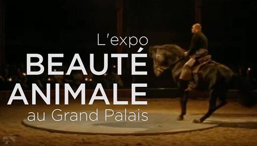 2012-beaute-animale-grand-palais-01