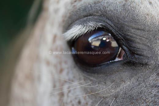 2012-07-12-festival-chevaux-sud-la-cavaliere-masquee-6