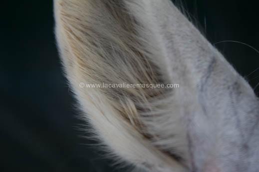 2012-07-12-festival-chevaux-sud-la-cavaliere-masquee-7