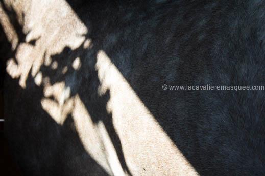 Les Chevaux du Sud par La Cavalière masquée