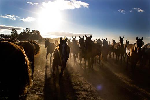 sebastiano-vitale-the-raw-horseproject-1