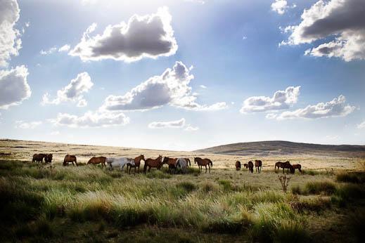 sebastiano-vitale-the-raw-horseproject-3