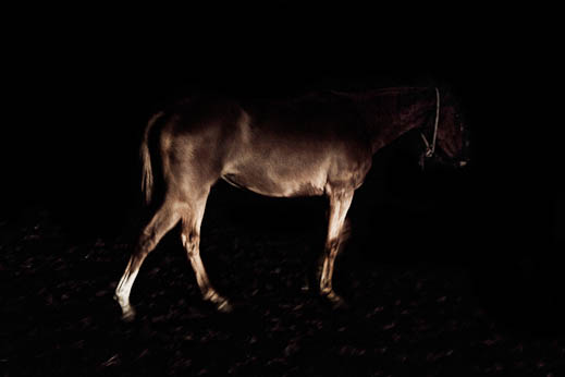 sebastiano-vitale-the-raw-horseproject-5