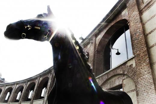 sebastiano-vitale-the-raw-horseproject-6