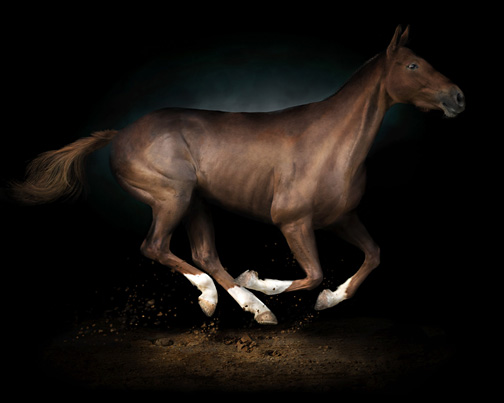 www.lacavalieremasquee.com / Irene Kung: Animals - Cavalli