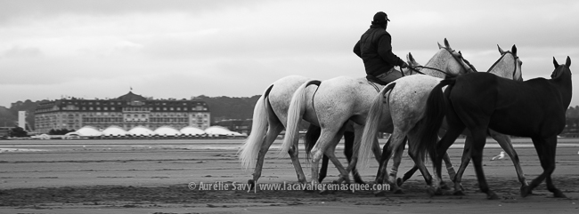 www.lacavalieremasquee.com | Chevaux x Polo x Deauville