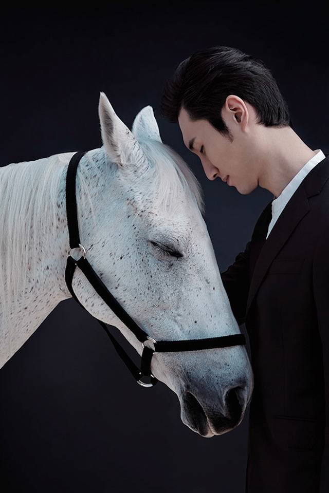 www.lacavalieremasquee.com | China-Life-Photography-Horse-Year3