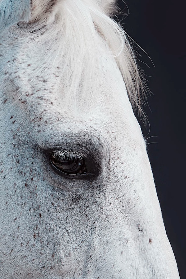 www.lacavalieremasquee.com | China-Life-Photography-Horse-Year5