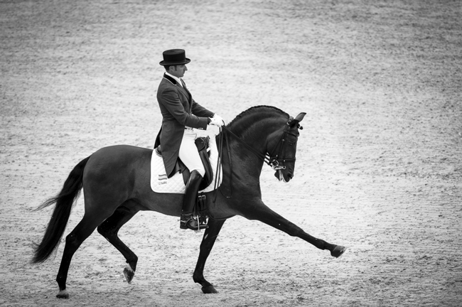 www.lacavalieremasquee.com | Dressage by Sindy Thomas
