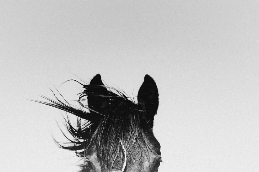www.lacavalieremasquee.com | Victoria Aguirre: Pampa Horses