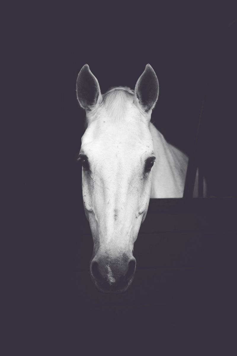 www.lacavalieremasquee.com   horse by Bret StClair
