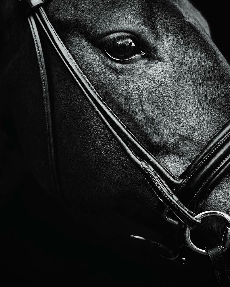 www.lacavalieremasquee.com | Horse by Rebecca Tengström