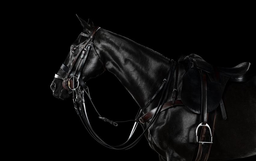 www.lacavalieremasquee.com | Equine by Ramón Casares