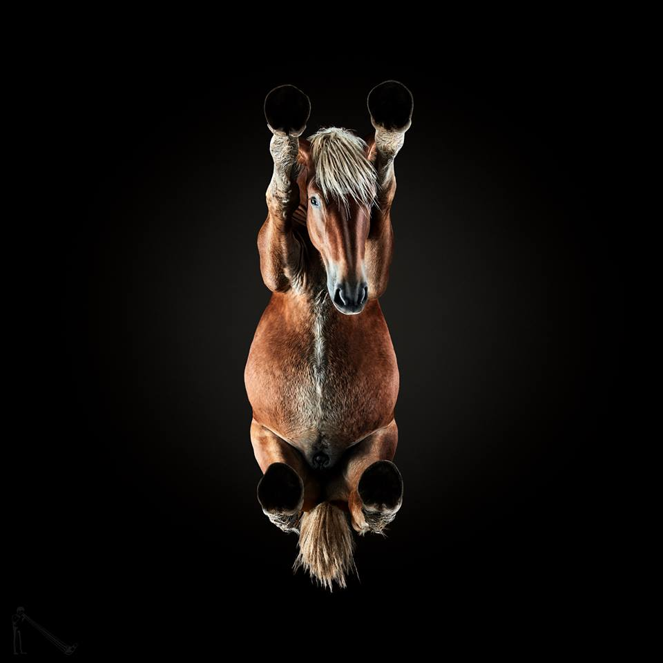 www.lacavalieremasquee.com | UNDER - HORSE by Underlook